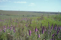 Photo: Tallgrass Prairie National Preserve