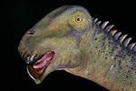 Photo: Nigerasaurus taqueti head