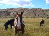 Photo: Wyoming ponies
