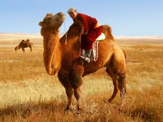 Photo: Camel-riding nomad