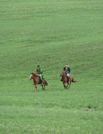 Photo: Riding Horses