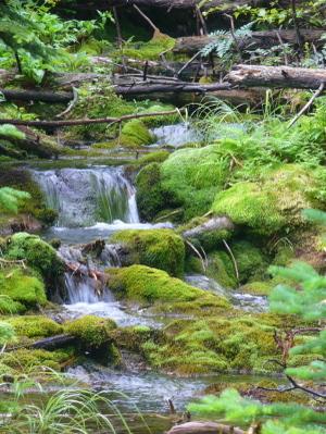 Photo: Maine Waterfall
