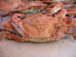 Photo: Blue crabs