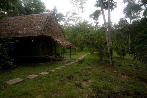 Photo: Amazon Madre Selva Field Station