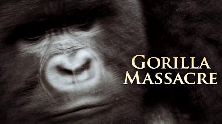 Gorilla massacre