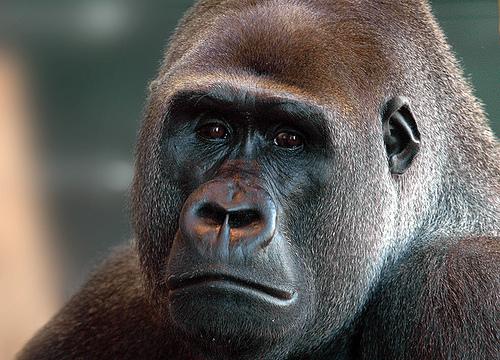Photo: Ape