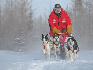 Photo: dog-sled team