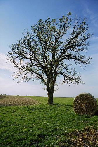 Photo: Iowa