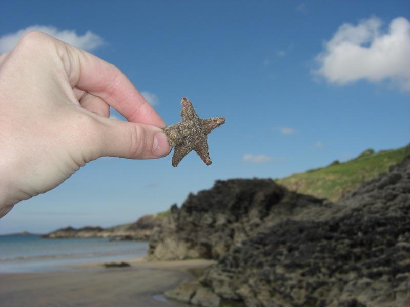Photo: Sand Star at Killybegs