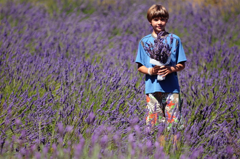 Photo: Orcas Island lavender field