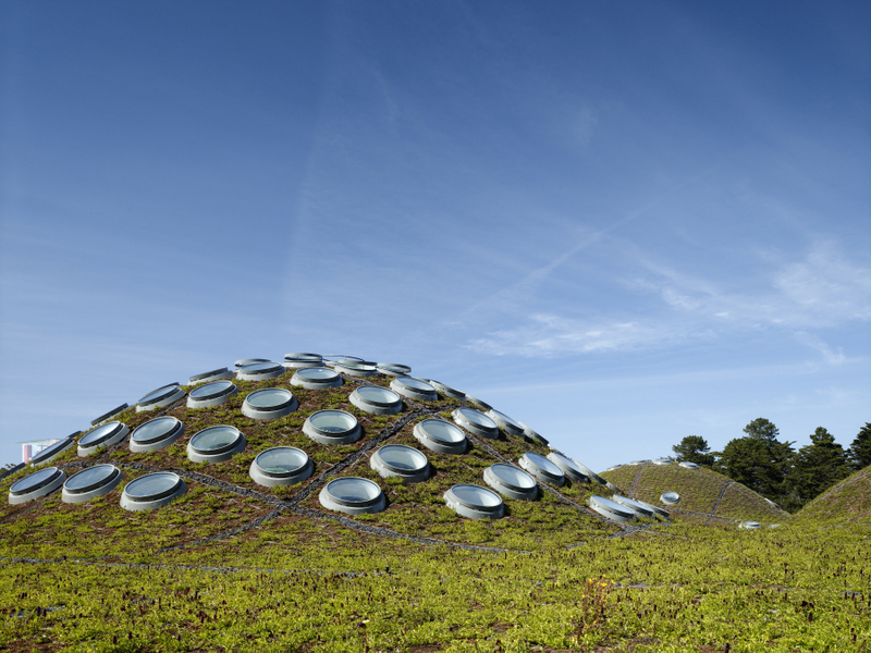 Photo: California Academy of Sciences living roof