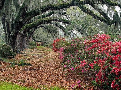 Photo: South Carolina